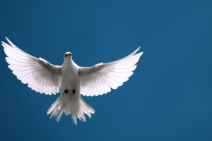 White dove flying ing with outstretched wings against blue sky